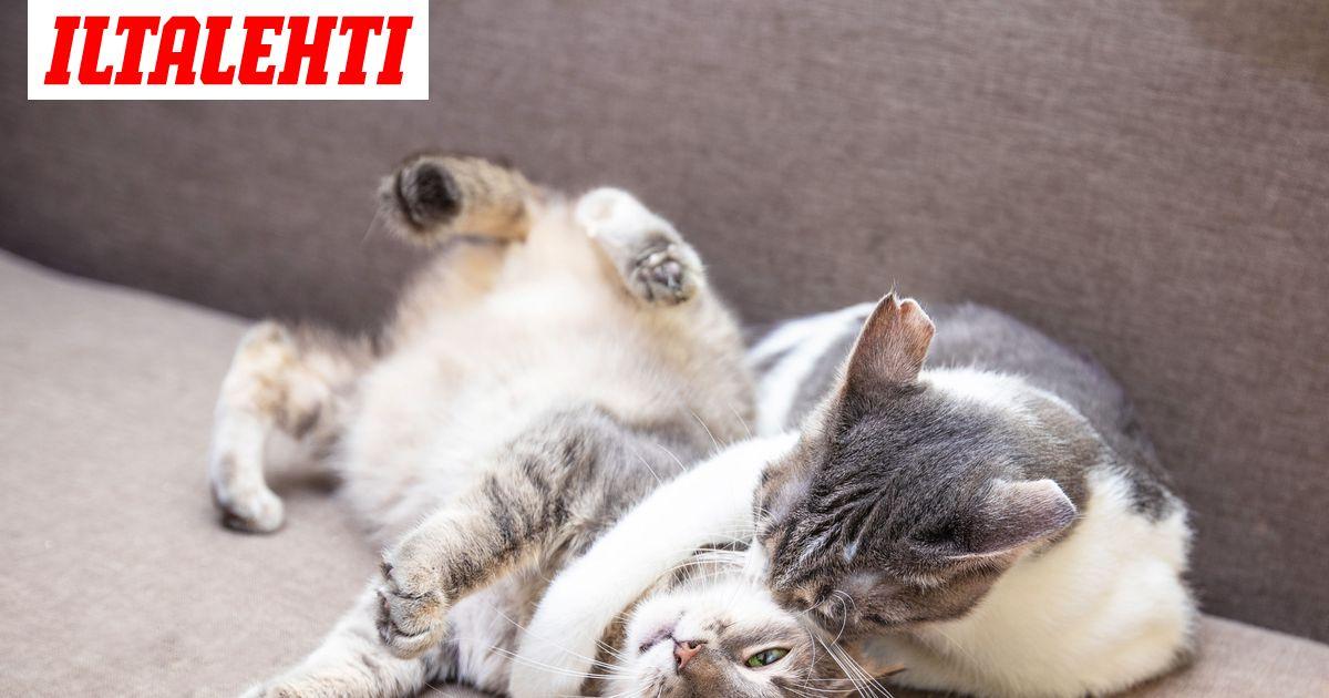 Kissan Käytöshäiriöt