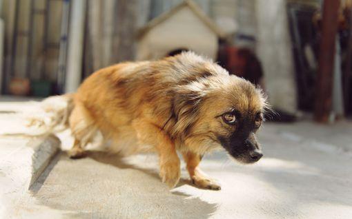 Saa lohduttaa, mutta ei pakottaa - 8 tapaa auttaa pelokasta koiraa
