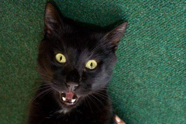 Hellyysmittari voi tulla kissalla vaivihkaa täyteen. Jos ihminen ei tätä huomaa, voi kissaan iskeä hellyysaggressio.