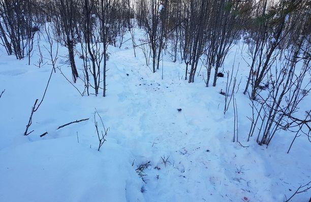 Susien jäljet tamppaantuivat metsään.