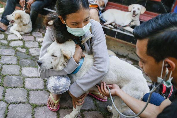 Eläinlääkäri tutki koiraa Indonesian Balilla vuosi sitten. Saaren hallinto suoritti tuolloin suuren rokotusohjelman hävittääkseen vesikauhun. Lähes puoli miljoonaa koiraa rokotettiin.