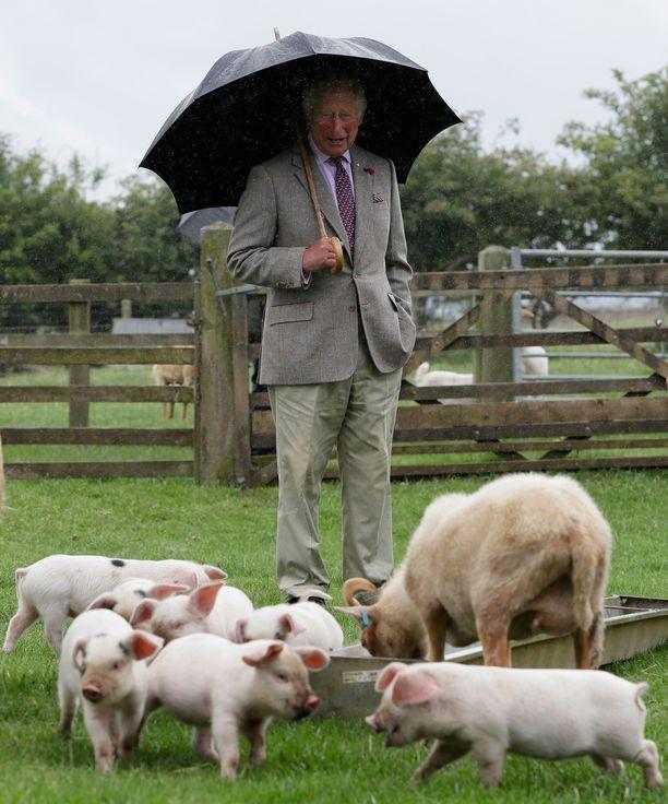 Prinssi Charles tarkkaili pikkupossujen ruokahetkeä turvallisen välimatkan päästä.