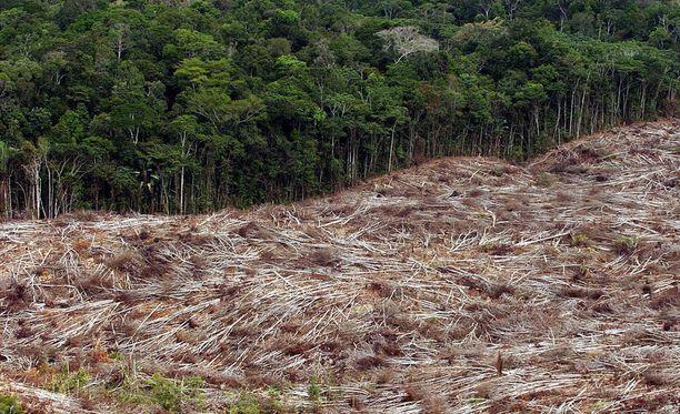 Global Forest Watchin mukaan muun muassa Brasilian elintärkeiden sademetsien tilanne on pahentunut. Kuvituskuva Brasiliasta vuodelta 2003.