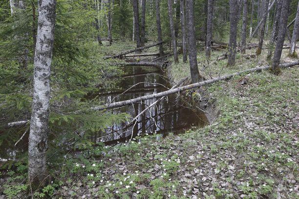 Nuuksion kansallispuisto sijaitsee Vihdin, Espoon ja Kirkkonummen alueella.