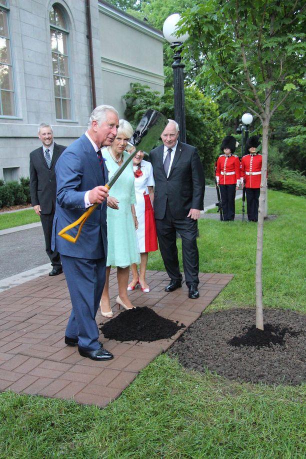Kaksikko istutti Kanadassa puun.