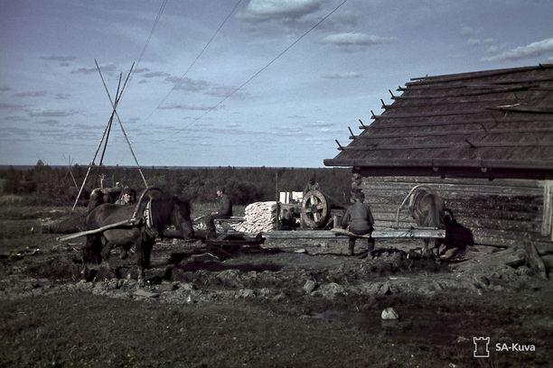 Sunnuntai elokuun 30. päivä vuonna 1942 ei ollut pyhitetty levolle. Pertjärven kylässä pyöri tasaiseen tahtiin hevosvetoinen pärehöylä. Kattopäreitä tehtiin kuumeisella kiireellä, jotta korsukatot saataisiin suojattua ennen syyssateiden alkua. Asemasodan aikana suomalaisjoukot käyttivät kylän kumpuilevia peltoja aktiiviseen ruuantuotantoon. Niistä sai esimerkiksi perunaa, lanttua, kaalia, porkkanaa, sipulia ja viljoja. Etulinjaan kylältä oli matkaa 7-8 kilometriä.