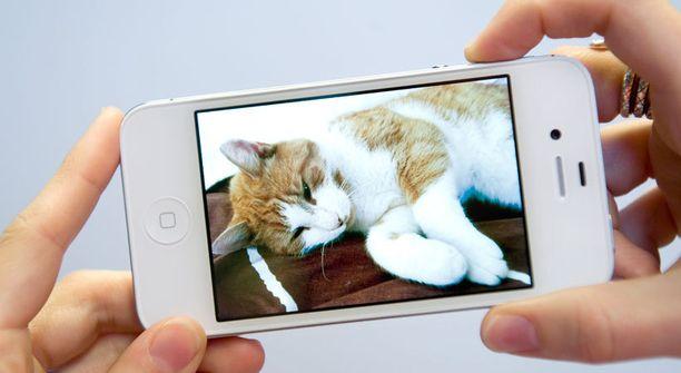 Applen iPhone on hyvityslistan kärjessä.