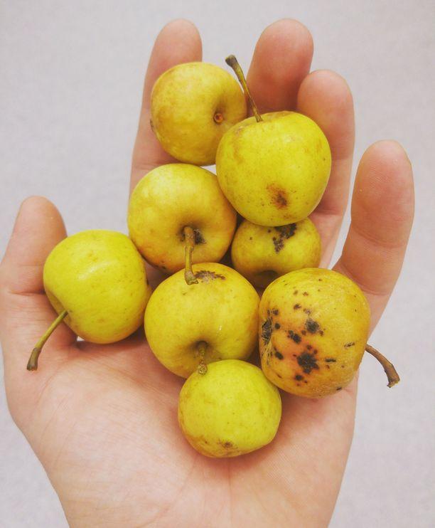 Kuura Ciderin siiderit valmistetaan kotimaisista omenoista.