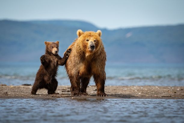 Pennut seurasivat tarkkaan emonsa touhuja ja matkivat niitä.