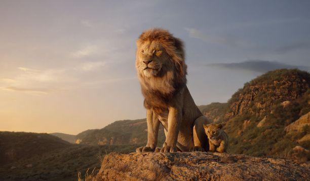 Mufasalla oli laumassaan paljon naaraita. Simba tuskin jäi hänen ainoaksi pennukseen.