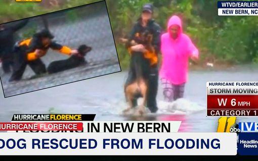 Juontaja keskeytti suoran uutislähetyksen pelastaakseen koiran