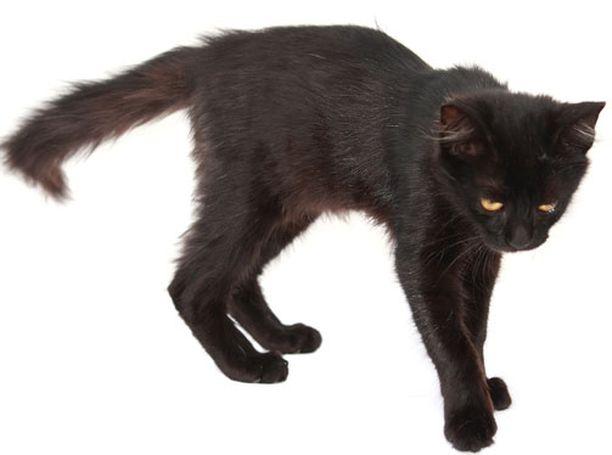 Outo tauti muuttaa myös kisojen käyttäytymistä. Kuvan kissa ei kärsi taudista.
