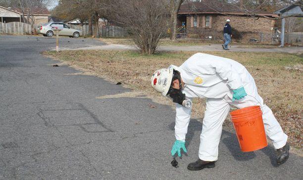 USA:n ympäristöviranomaisten palkkaama työntekijä poimi kuolleita lintuja kaduilta lauantaina.