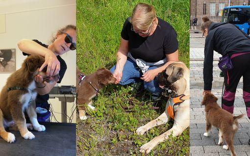Viisi asiaa, jotka koiralle tulisi vähintään opettaa - mitä yksinkertaisin keino saada jopa rähinätilanne poikki