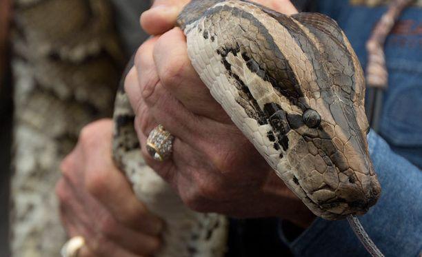 Pyton tappoi miehen Balilla. Kuvan käärme ei liity tapaukseen.