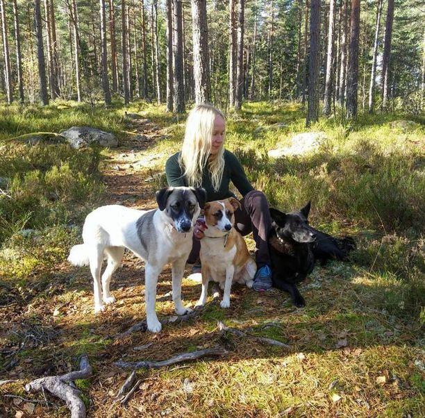 Kovia kokenut Ida-koira (oik.) elää nyt onnellista kolmijalkaisen koiran elämää Siurossa yhdessä omistajansa Elisa Aaltolan ja Romaniasta pelastettujen Darla- ja Siiri-koirien kanssa.