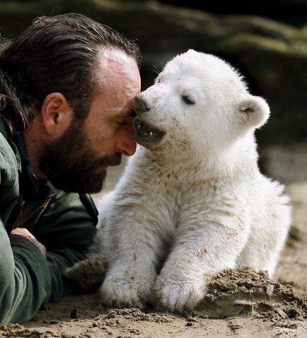 Arkistokuva vuodelta 2007 Knutista sen kasvatti-isän Thomas Dörfleinin kanssa. Knut kuoli yllättäen nelivuotiaana. Kuolema aiheutui todennäköisesti epileptisestä kohtauksesta, jonka aikana eläin putosi veteen ja hukkui.