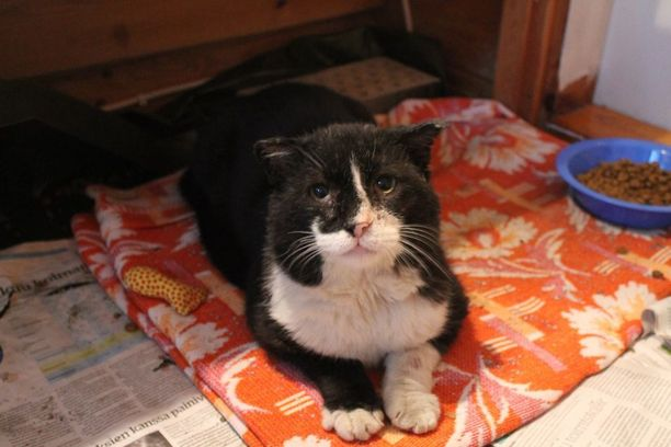 Oton entinen omistaja pääsee katsomaan kissaa halutessaan.