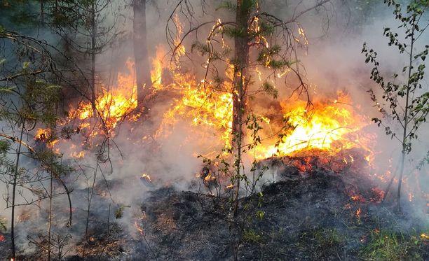 Pohjois-Savossa on voimassa metsäpalovaroitus. Kuvituskuva.