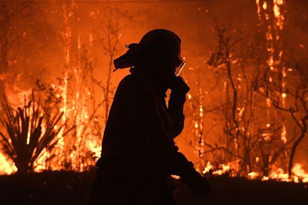 Ilmaston lämpeneminen pidentää kuivia kausia ja viivästyttää sateita, mikä lisää metsäpaloja.