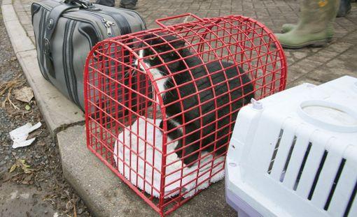 Pelkästään Palm Beachin alueelta on pelastettu 50 kotieläintä. Kuvituskuva.