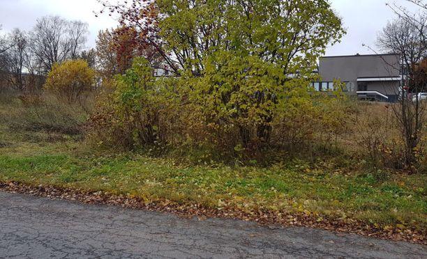 Tältä tontilta löytyi naisen ruumis syksyllä.