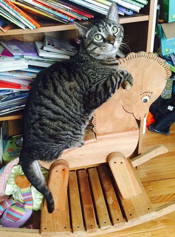 Annie McMillanin kissa löysi keinuhevosen.