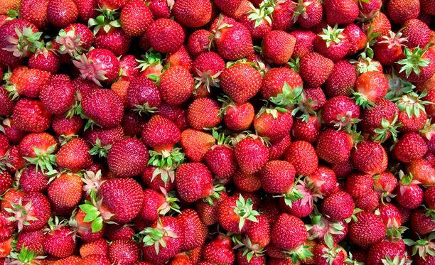 Aikainen kevät lupaa mansikkaa jo juhannukseksi.