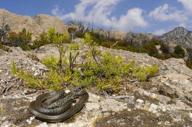 Montecristolla elää useita uhanalaisia kasvi- ja eläinlajeja. Siksi sille pääsyä säädellään tarkoin.
