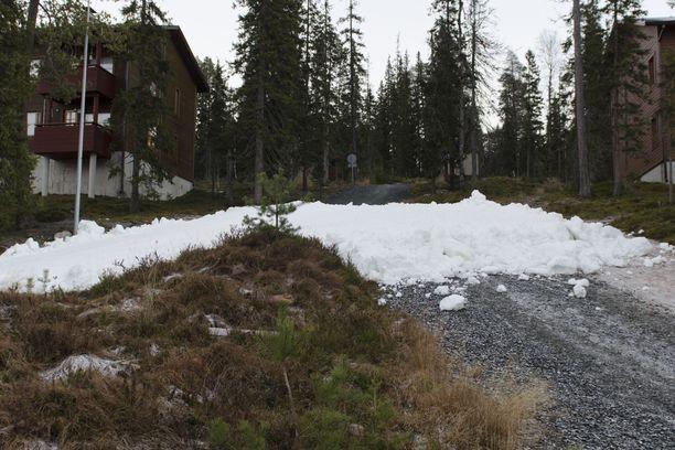 Rukan kisalatu katkeaa kesken, kun lunta ei riittänyt.