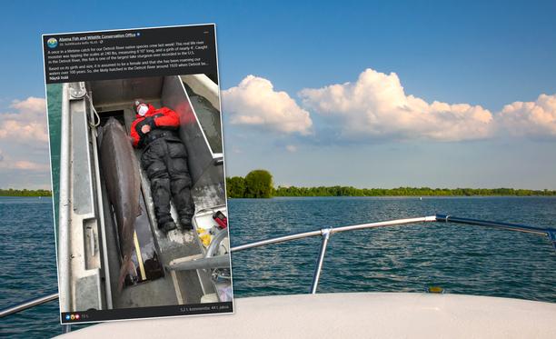 Järvisammen arvioidaan kuoriutuneen Detroitjoessa vuoden 1920 tienoilla. Joki virtaa Suurten järvien alueella Yhdysvaltojen ja Kanadan rajalla.