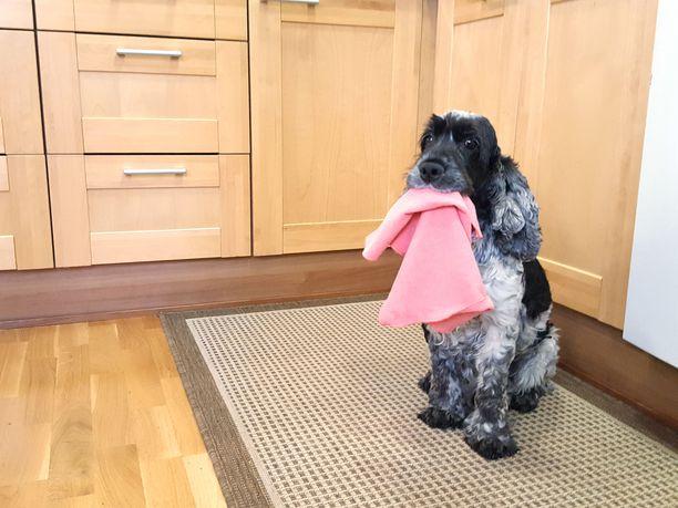 Koiran karvojen putsaamiseen on helpompikin keino kuin opettaa koira siivoamaan itse.