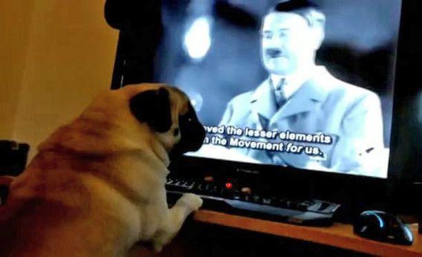 Koiralle näytettiin myös vanhoja natsien propagandafilmejä ja se oppi reagoimaan niihin.