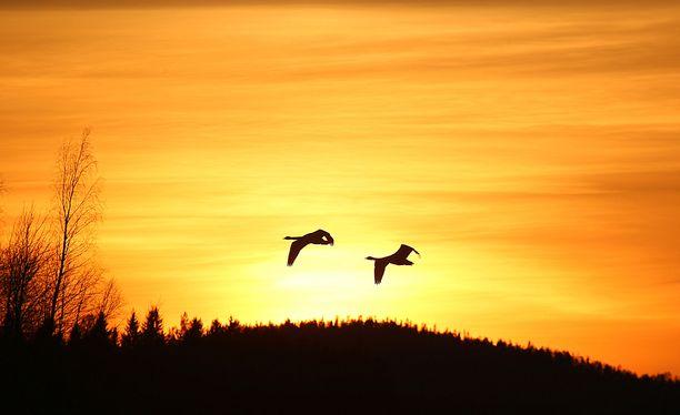 Raijan järjestelmäkameraan tallentui upea auringonlaskukuva Pohjois-Karjalassa.