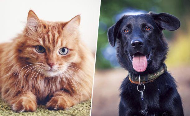 Lemmikin ruokakupin materiaaliksi kannattaa valita jokin muu kuin muovi ainakin, jos lemmikki on herkkäihoinen.