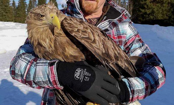 Kuvassa lintu sen havainneen miehen sylissä.