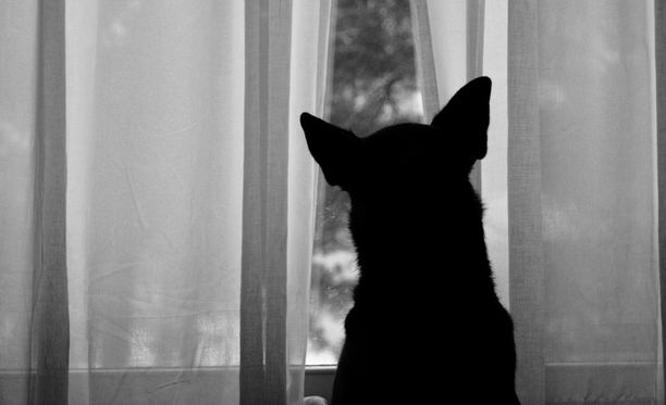 Nuorta miestä epäillään koiran raa'asta pahoinpitelystä. Kuvistuskuva.