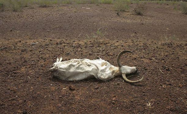 Tilanne Malissa on ollut viime aikoina sekasortoinen.
