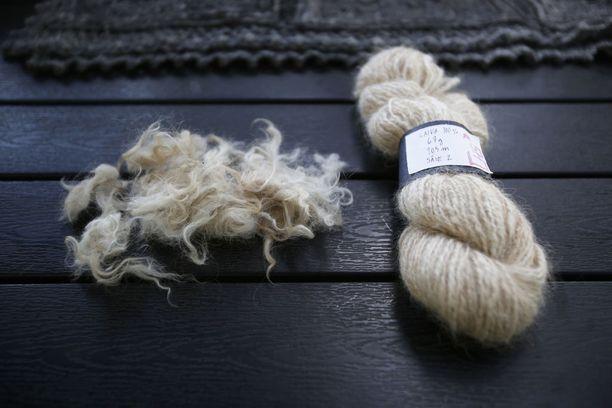 Tämä lanka on tehty Tiina Huhtinen-Siistosen oman lagotto romagnolo -rotuisen Laika-koiran karvasta. Kerän vieressä on leikattu karva. Valmis lanka tuoksuu vielä vähän koiralle.