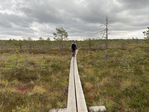 Helppo kulkea: valtaosa Valkmusan rengasreitistä kierretään pitkospuita pitkien.
