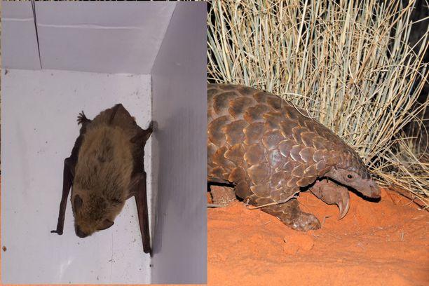 Mikä eläin sopisi vielä tähän kuvaan? Sitä tutkijat nyt pohtivat.
