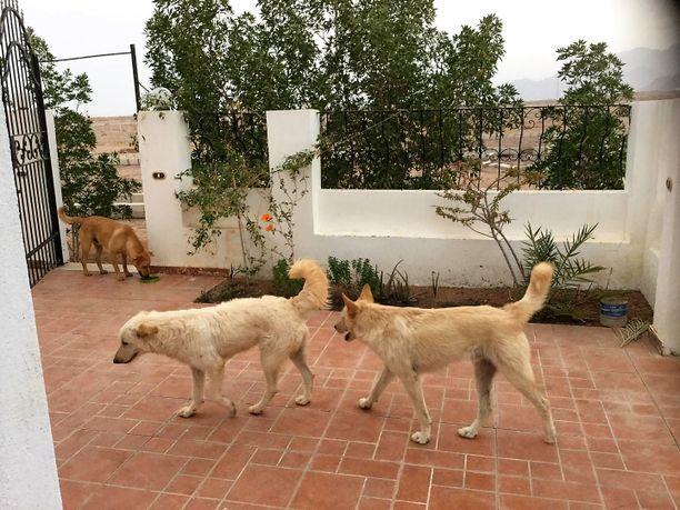 Zahadi Wahidin Gloria-koira (keskellä) myrkytettiin myös. Kuvassa Gloria päivää ennen myrkyttämistä.