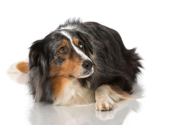 Eläimen stressistä kertovat eleet jäävät usein huomioimatta, vaikka elekielen ymmärtäminen ja sen mukaan toimiminen parantaisi eläimen hyvinvointia.