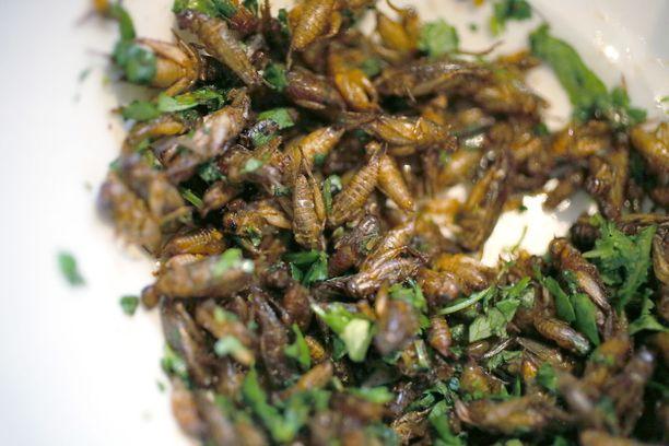 Hyönteisissä on runsaasti potentiaalia kestävän ruokatuotannon näkökulmasta.