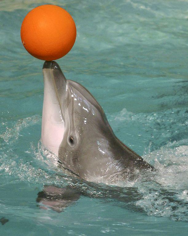 Leevi näyttää taitojaan pallon kanssa.
