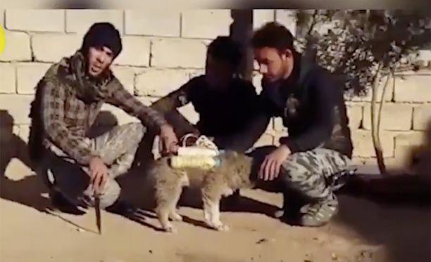 Videolla näkyvän koiran ympärille oli sidottu räjähteillä ja metallinkappaleilla täytettyjä vesipulloja.
