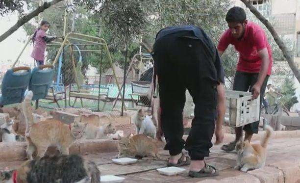 Kissat saavat ruokaa ja niistä pidetään hyvää huolta, vaikka kaupunkia pommitetaan jatkuvasti.