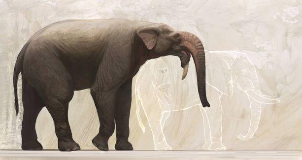 """Kuvassa Deinotheriumin rekonstruktio. Miljoonia vuosia sitten eläneen Deinotheriumin tieteellinen nimi merkitsee suomeksi """"hirmuinen eläin"""". Se muistutti ruumiinrakenteeltaan norsuja, mutta oli varsin kaukaista sukua nykynorsuille. Sen kallo ja hampaat olivat aivan erilaiset. Eläimen syöksyhampaat kasvoivat alaleuasta ja kaartuivat alaspäin, siis päinvastaiseen suuntaan kuin yläleuasta kasvavat syöksyhampaat norsuilla ja mammuteilla."""