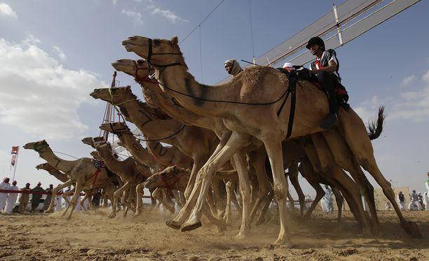 Yksi lajeista on ratsastuskilpailu. Palkintorahoja on jaossa yhteensä noin 50 miljoonaa euroa.