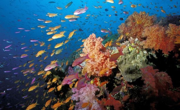 Koralliriutat